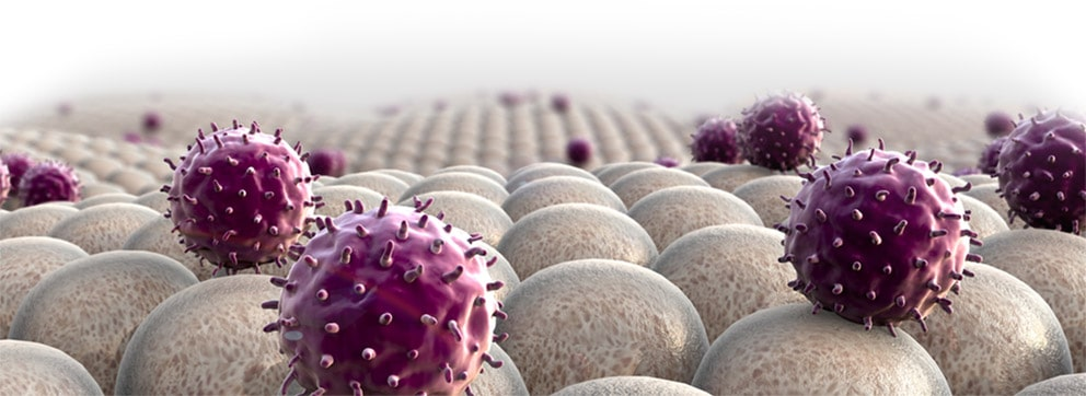 sistema imunológico - Haiflex